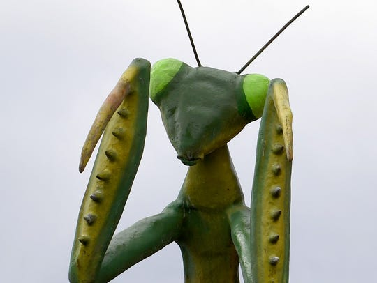 A much larger-than-life praying mantis, created by