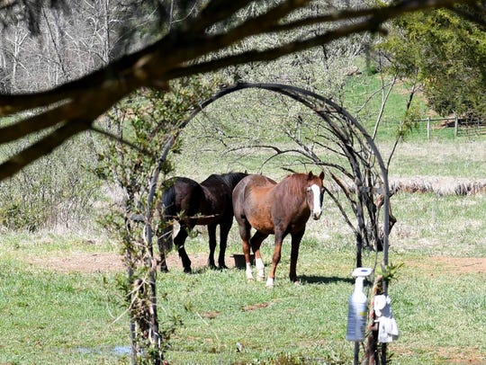 Horses viewed from the garden at 803 Stingy Hollow