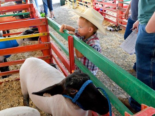 Cowboy hat in place, 4-year-old Silas Rawley of Mount Solon watches the sheep from across the top fence rail at the 73rd annual 4-H/FFA Market Animal Show and Sale at Augusta Expo on Thursday, May 3, 2018. The event continues Friday and Saturday.