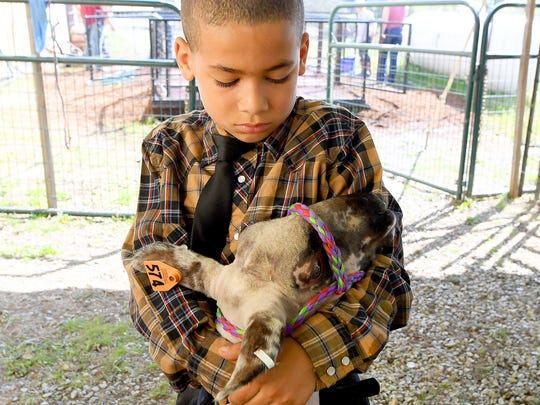 Karson Ayers, 9, of Riverheads Elementary holds onto his sheep as they wait for their turn to compete in the show ring at the 73rd annual 4-H/FFA Market Animal Show and Sale at Augusta Expo on Thursday, May 3, 2018. The event continues Friday and Saturday.