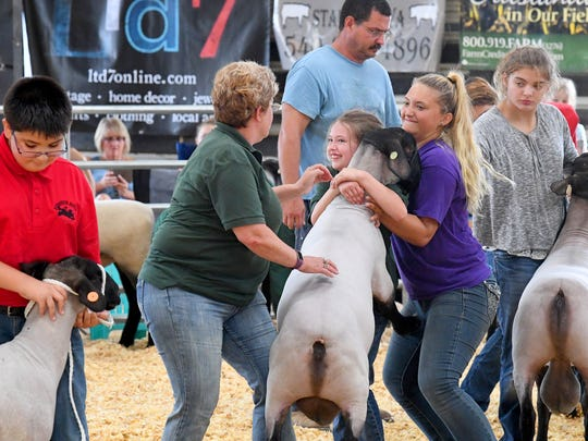 Addie Hall (center) receives a little help and cannot help but smile as they work to settle her ram after the animal jumps up onto her during judging. Addie participates in the purebred Suffolk sheep show at the Augusta County Fair on Wednesday, August 1, 2018.