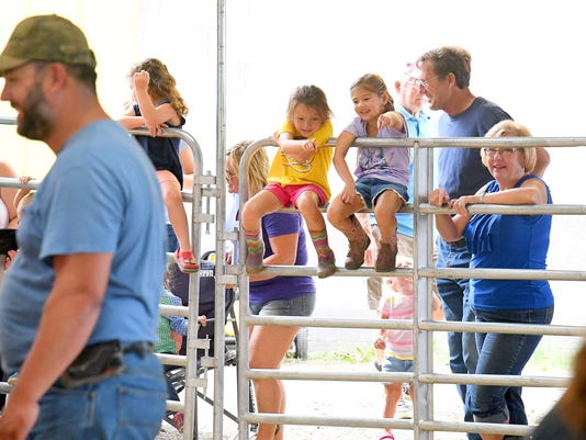Sheep and Pedal Power at Augusta Co. Fair
