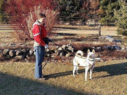 Marcus, a Jindo mix, was raised on a Korean dog meet
