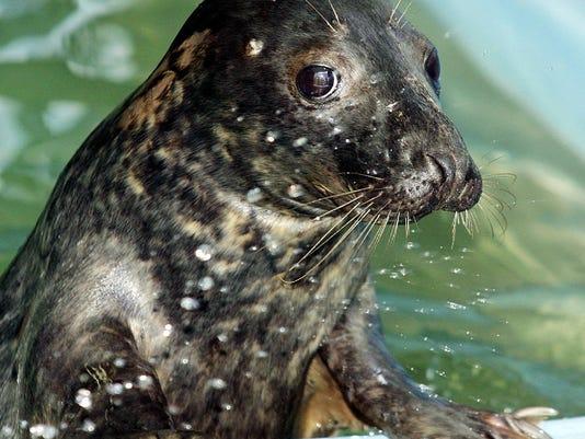 gray seal.jpg