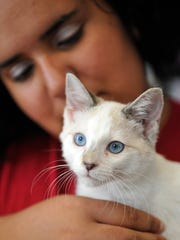 Ashley Oswald holds a cute blue-eyed kitten at Crossroads