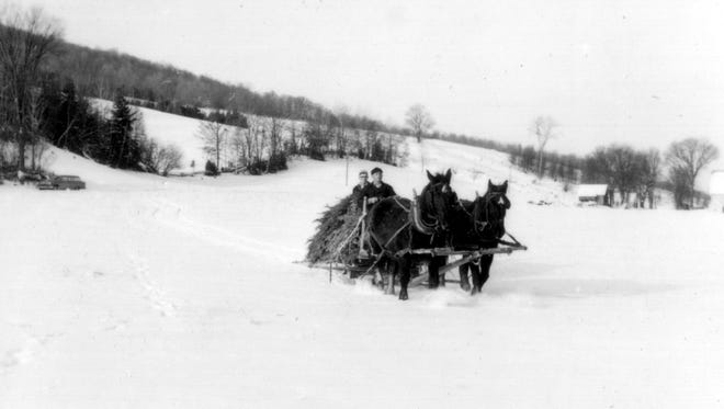 A horse-drawn sled totes a Christmas tree, circa 1960 in this photograph from Vermont State Archives.