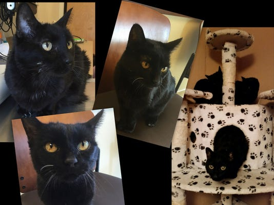 636022347682725807-Ricky-Lucy-Ethel---Jims-cats1.jpg