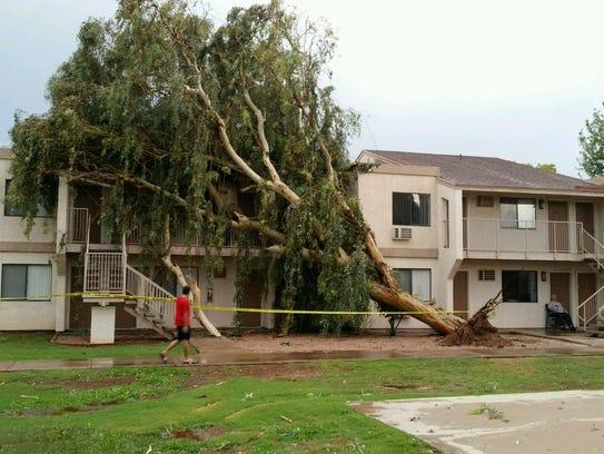 Lightning took down this tree at the Desert Garden