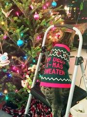 In this Dec. 9, 2015 photo, Catie Savage's cat Ziggy,