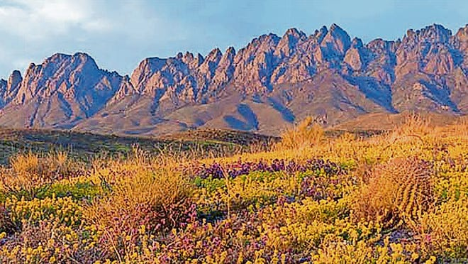 Granite peaks of the Organ Mountains.