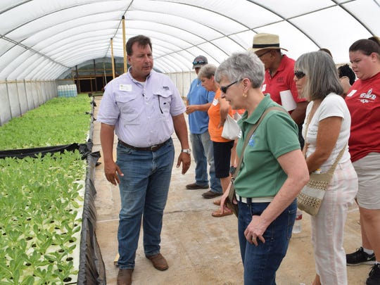 "Jay Pearson, owner of Gray-Walk Farms on Highway 1 in Alexandria, shows romaine lettuce in a greenhouse to Foodapalooza participates as he conducts a tour of his farm Tuesday. The tour was part of the ""Foodapalooza: Farm to School Edition"" and sponsored by the LSU AgCenter and the Central Louisiana Economic Development Alliance. The event was held for those interested in the local farm-to-school movement."