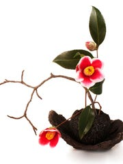 ikebana with camellia flowers isolated on a white background