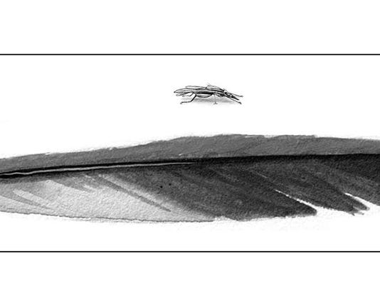 TOS_flatflies.jpg