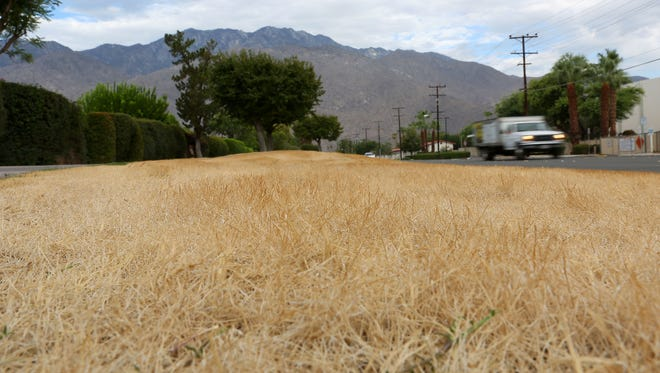 Much of the grass adjacent to Ramon Road, at the Mesquite Country Club in Palm Springs, has been allowed to go brown, as seen on July 30, 2015.