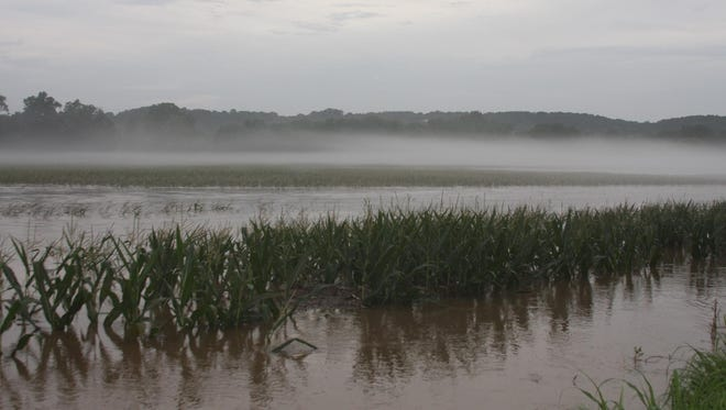 """This corn field near the point where the Finley and James rivers meet was severely flooded during last week's heavy rains. One area farmer said trying to plant this summer has been """"miserable."""""""