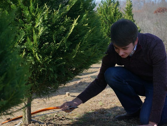 Will Baker kneels to cut down a Christmas tree at Bluebird Christmas Tree Farm in Heiskell.