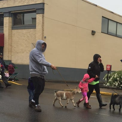 Coziness is a prized situation: Furry friends were featured during Silverton's Pet Parade Saturday.