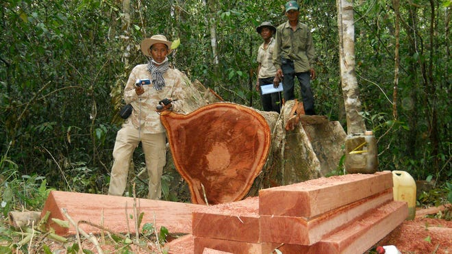 In this file photo taken Feb. 6, 2012, and released by the Cambodian Center for Human Rights, Cambodian environmental activist Chut Wutty (left) stands next to a felled log in a jungle in Kampong Thom province north of Phnom Penh, Cambodia.