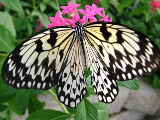 636504317496935854-the-butterfly-palace-13873403164-o.jpg