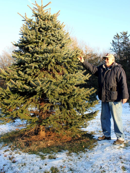 Christmas Trees-Growers.jpg