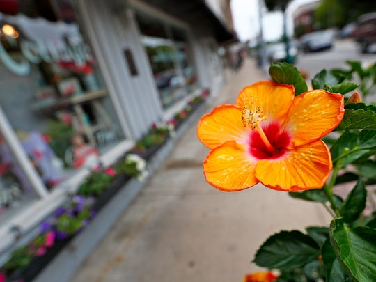 A flower brightens the sidewalk along the shops on