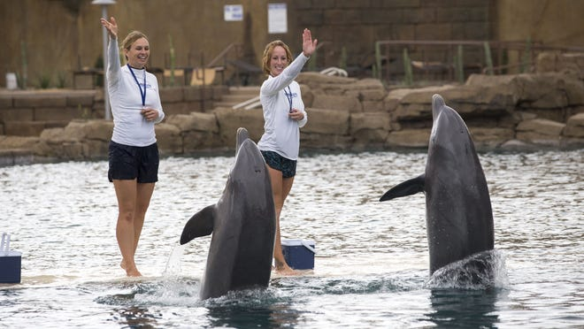 Trainers Laura Kesselring (left) and Ashley Acridge work with dolphins at Dolphinaris Arizona near Scottsdale. Dolphinaris, an attraction that has generated controversy for bringing captive dolphins to the desert, opened Oct. 15, 2017 at the OdySea in the Desert complex. Kesselring left the facility in July 2017 and no longer works for Dolphinaris Arizona.