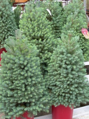 Trees of Remembrance are available until Dec. 28 at VNA Hospice's Hidden Treasures thrift stores.