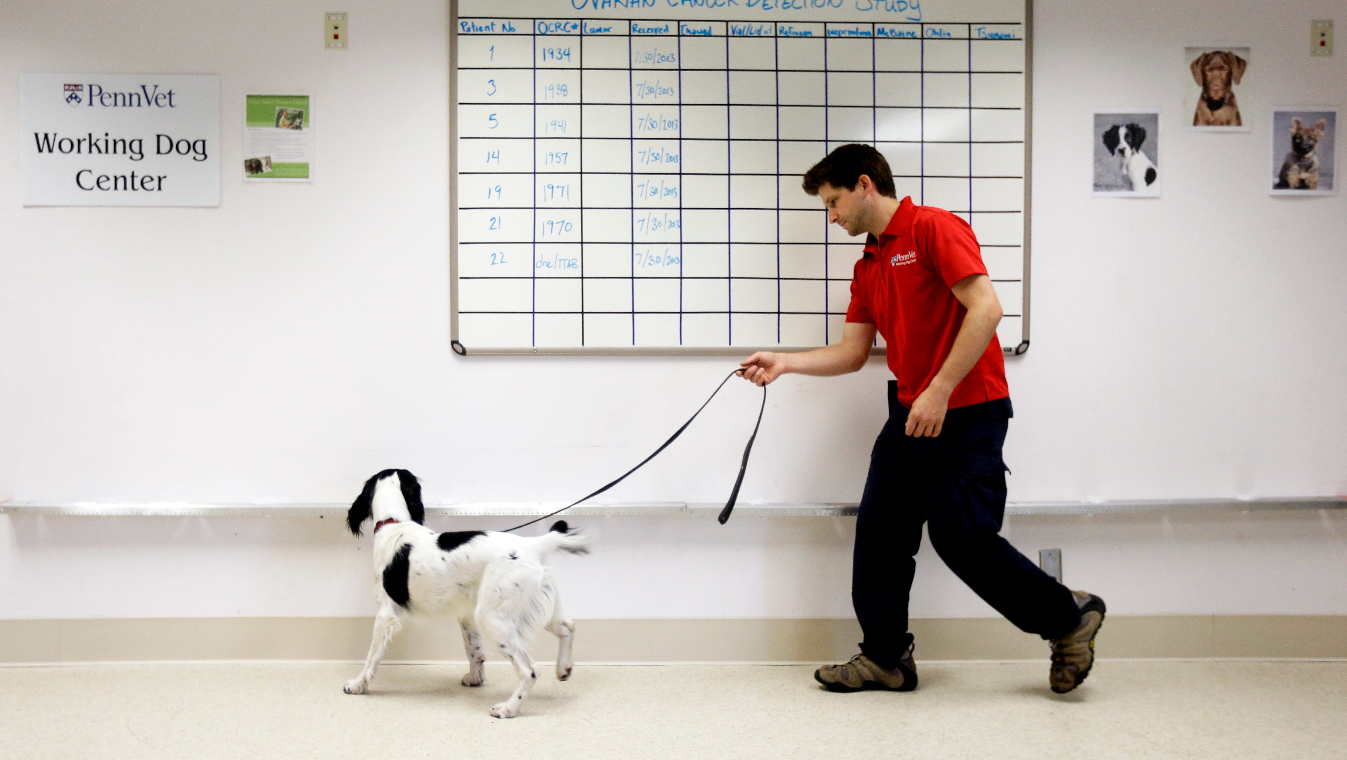 Dogs Trained To Help Sniff Out Ovarian Cancer