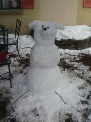 Stacy Cleary's snow dog!