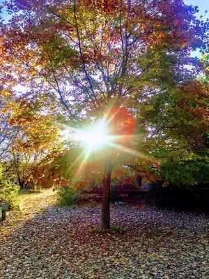 Sunlight streams through a mult-colored tree.