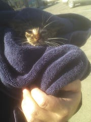 The kitten moments after being rescued from the drain pipe