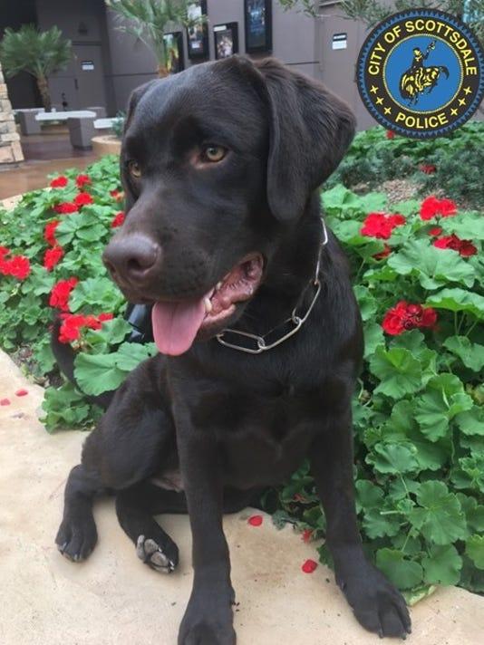 Scottsdale police crisis dog