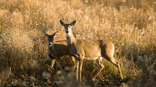 MDC reports 15,425 harvested during the antlerless portion of deer season. Top harvest counties were Callaway, Morgan, and Osage.
