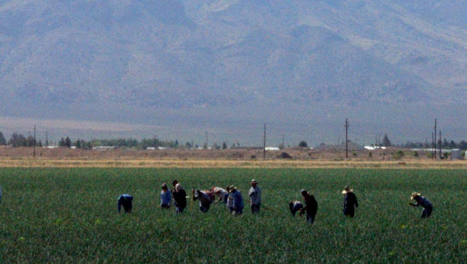 Field workers are harvesting the onion fields in Luna County. The sweet, yet pungent odor permeates the evening air in and around Deming. The field pictured here uses the Florida Mountains as a backdrop.