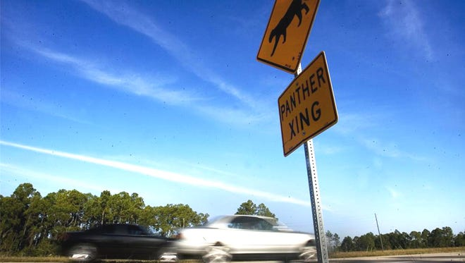 Vehicle deaths are the no. 1 cause of documented deaths for Florida panthers.