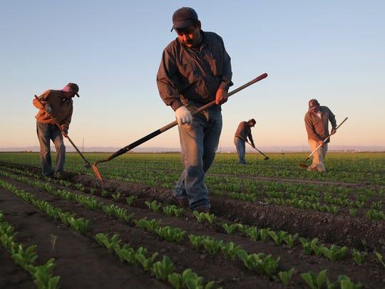 Agricultores mexicanos trabajando en Holtville. Foto