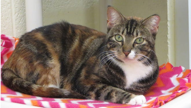 Daphne is a very fun-loving and entertaining kind of cat.