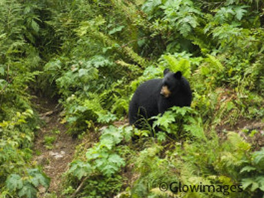 My encounter with a bear showed me a different way to think about our connection with all life