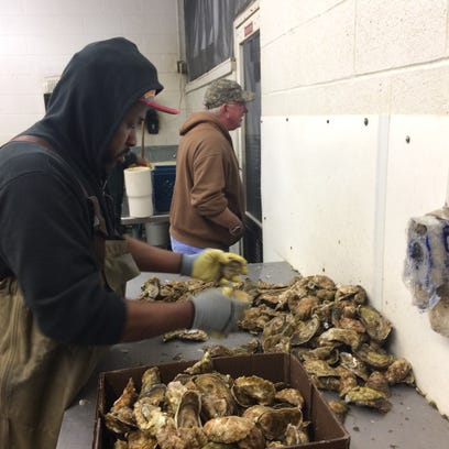 'Nobody anticipated' oysters making a comeback; industry transforms