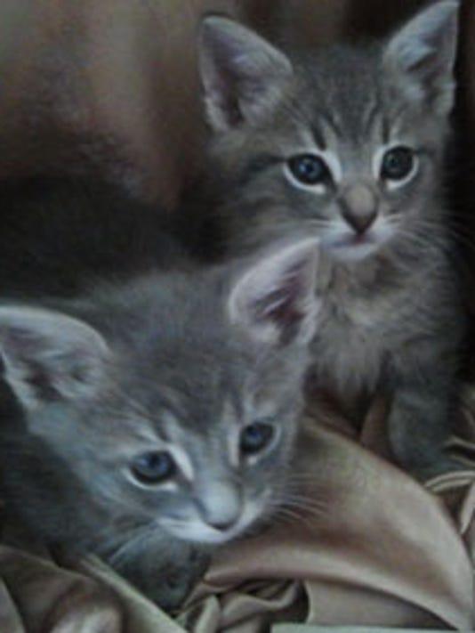zoe-kittens1107
