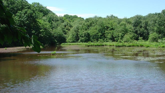 Freneau Woods Park encompasses the headwaters for Lake Lefferts.