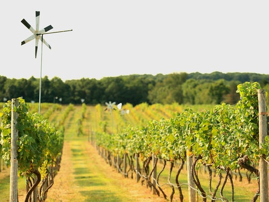 A sunny day in the vineyard at 4JG's Winery in Colts Neck.