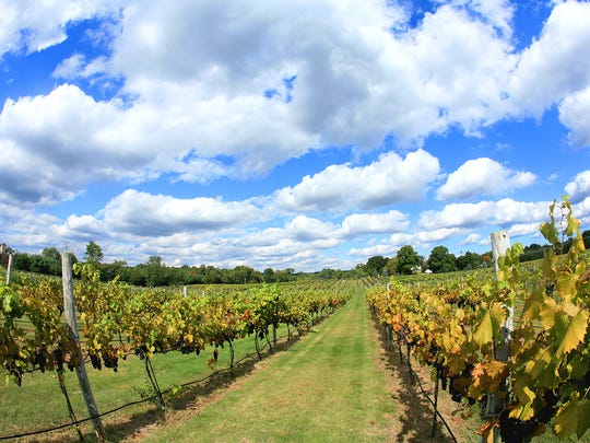 Puffy clouds float over the vineyard at 4JG's Winery in Colts Neck.