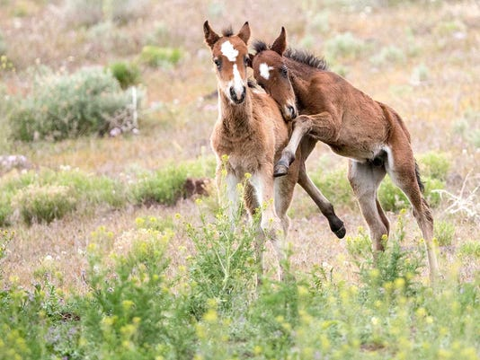 636262040082965990-horse2.jpg