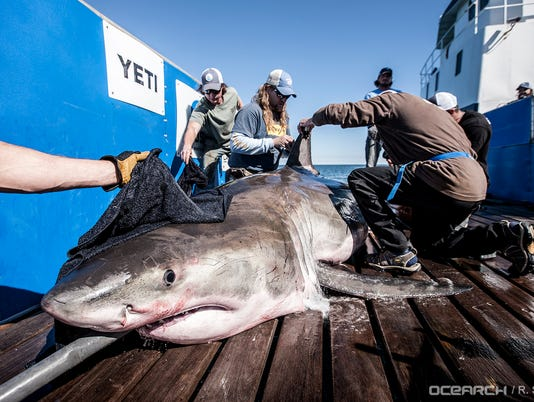 636603412119776609-03032017-OCEARCH-Lowcountry-0306.jpg