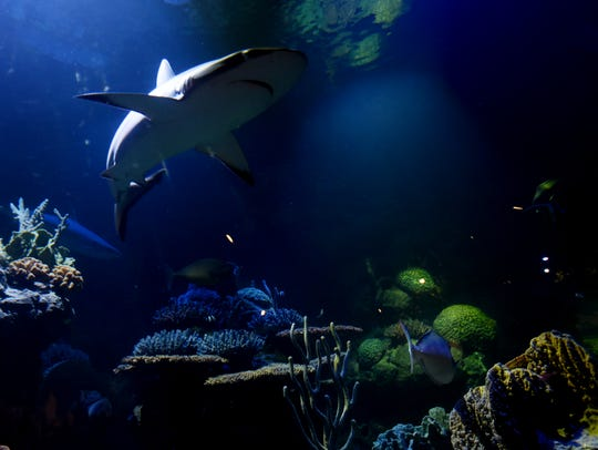 Shreveport Aquarium will host a New Year's Eve dinner on Dec. 31.