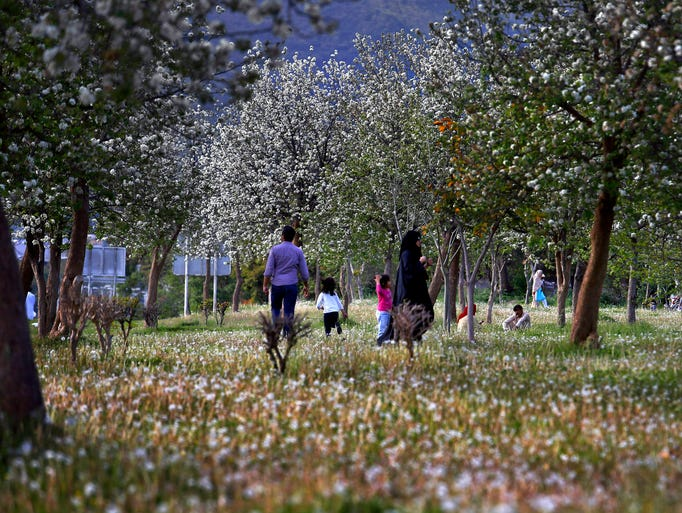 A family walks in a park amid tree ad flower blossoms