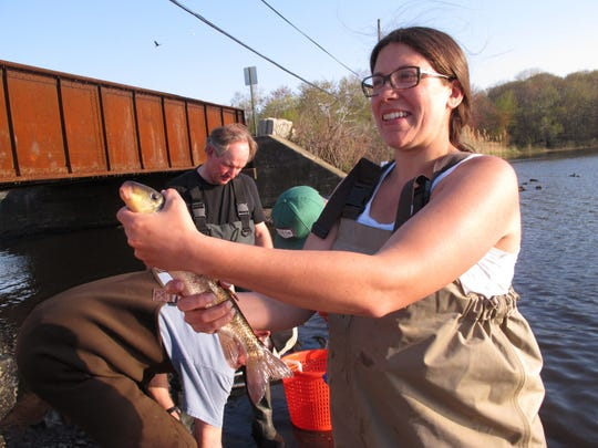 In this May 4, 2015 photo, Jenna Krug, a restoration coordinator of the American Littoral Society environmental group, holds a white sucker that her group caught in a net at Wreck Pond in Spring Lake, N.J. The group and several government agencies are studying fish populations in the pond before building a $4 million tunnel to help fish get to and from the ocean and the pond more easily, while reducing flooding risk after Superstorm Sandy. (AP Photo/Wayne Parry)