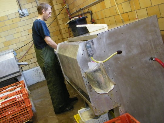 Port Clinton Fish Co. employee Nate Greiner works the scaling machine.