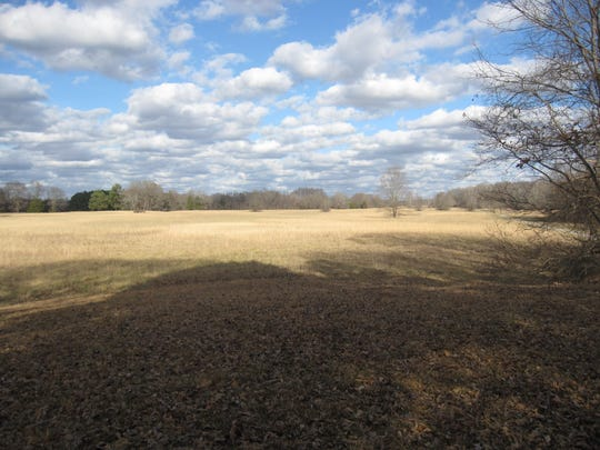 Late fall view of the prairies at Pinson Mounds looking westward. Pinson Mounds State Archaeological Park covers more than 1,200 acres and contains at least 15 Native American mounds.